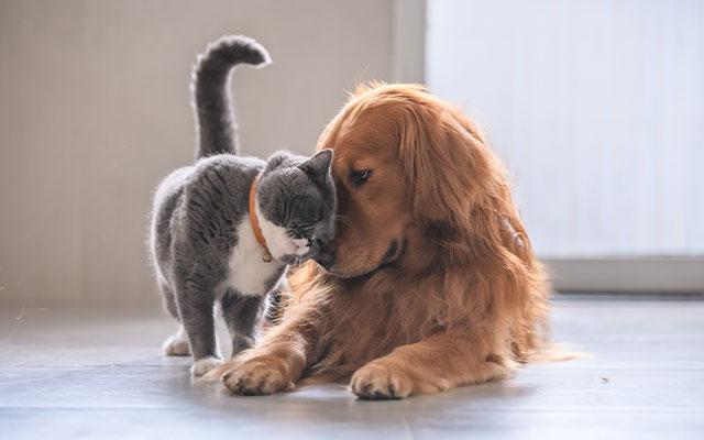 Tierarzneimittel